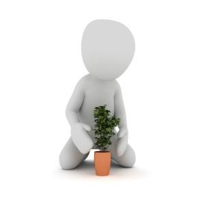 plant-1020159